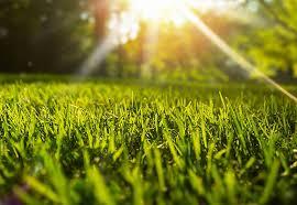Perfect Lawn Care